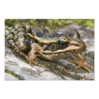 Tree frog at the entrance to small cave, photographic print