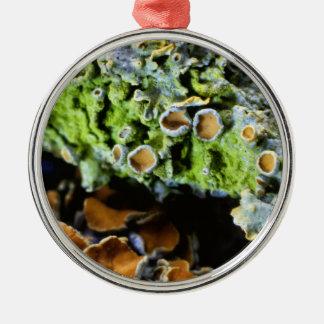 Tree Lichen Super Macro photography Silver-Colored Round Decoration
