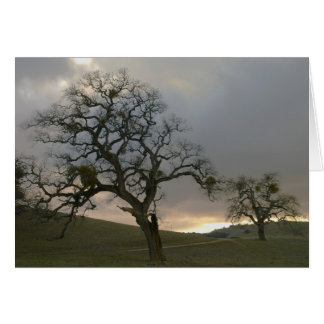 Tree Mates: Winter Oaks with Mistletoe Note Card