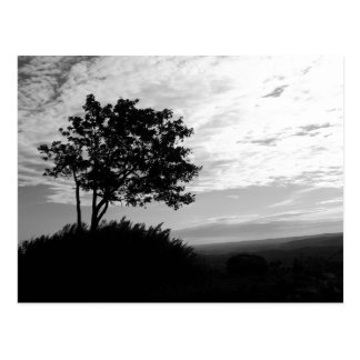 Tree Silhouette Monochrome Postcard