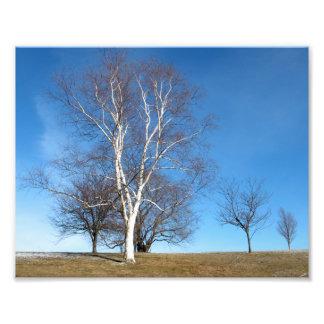 Trees in Winter, Boston, MA, 9.3x7.3 photo print
