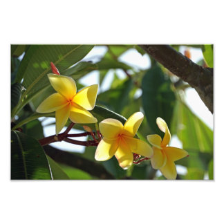 Tropical Yellow Flower Print Photo Art