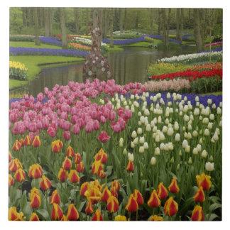 Tulip and hyacinth garden, Keukenhof Gardens, Large Square Tile