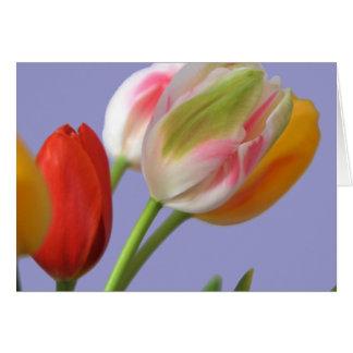 Tulip Colors Card
