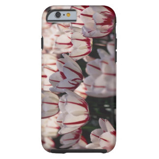 Tulips Tough iPhone 6 Case