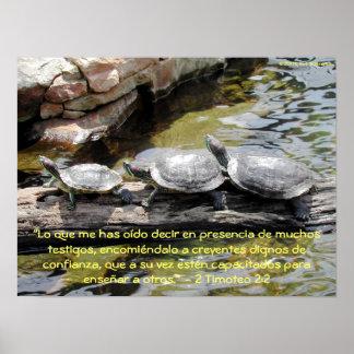 Turtles—2 Timoteo 2:2 Poster