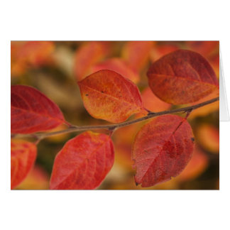 Twig covered with autumn leaves greeting card