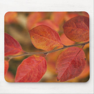 Twig covered with autumn leaves mouse pad
