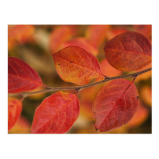 Twig covered with autumn leaves postcard