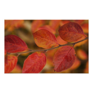 Twig covered with autumn leaves poster