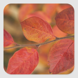 Twig covered with autumn leaves square sticker