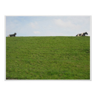 Two Cows relaxing Holland Photo Poster