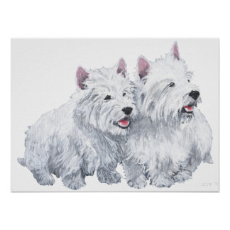 Two West Highland White Terriers Poster