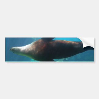 Underwater Sea Lion Bumper Sticker