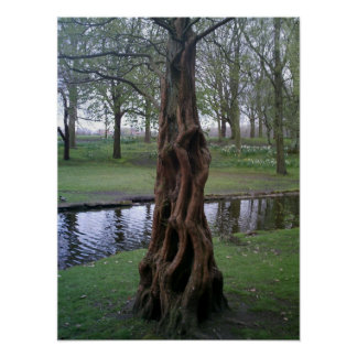 Unusual Tree Bark Growth Poster