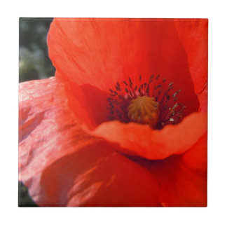 Upright Poppy Small Square Tile