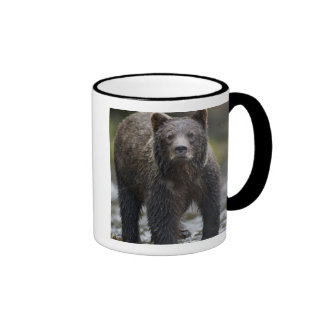 USA, Alaska, Freshwater Bay, Brown Grizzly) Ringer Mug
