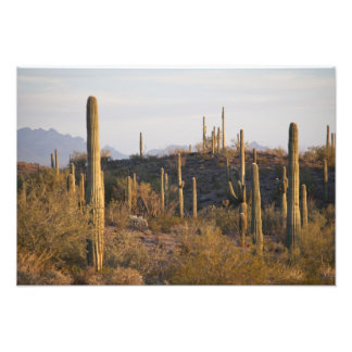 USA, Arizona, Sonoran Desert, Ajo, Ajo 2 Photographic Print
