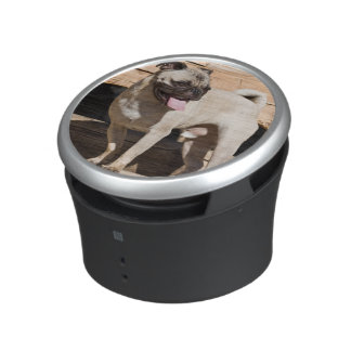USA, California. Pug Standing On Wooden Bench Bluetooth Speaker