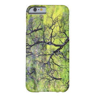 USA, California, San Diego. A burnt oak forest Barely There iPhone 6 Case
