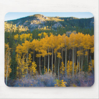 USA, Colorado. Bright Yellow Aspens in Rockies Mouse Pad
