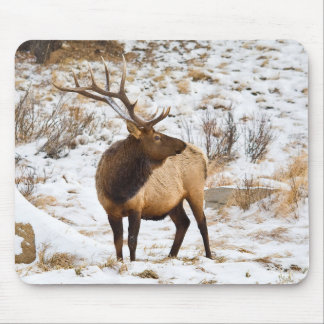 USA, Colorado, Close-Up Of Bull Elk Mouse Pad