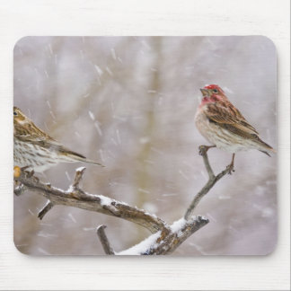USA, Colorado, Frisco. Female and male Mouse Pad