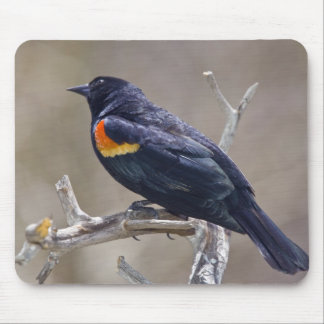 USA, Colorado, Frisco. Portrait of male Mouse Pad