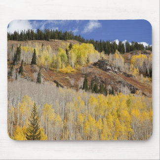 USA, Colorado, Gunnison National Forest, along Mouse Pad