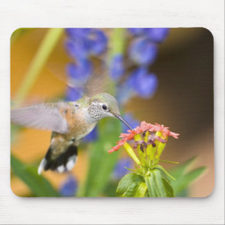 USA, Colorado, Lake County, Leadville. Female Mouse Pad