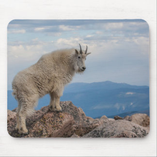 USA, Colorado, Mt. Evans. Mountain Goat Stands Mouse Pad