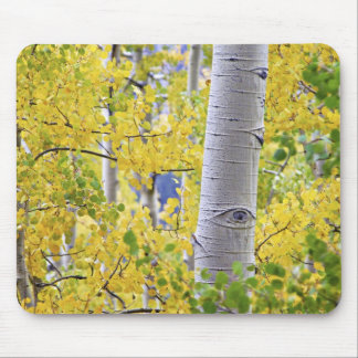 USA, Colorado, Rocky Mountains.  Intimate aspen 2 Mouse Pad