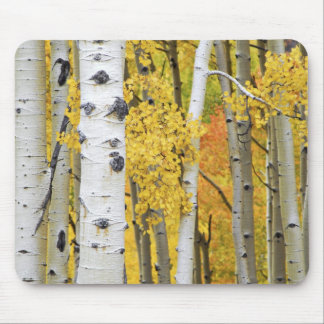 USA, Colorado, Rocky Mountains.  Intimate aspen Mouse Pad