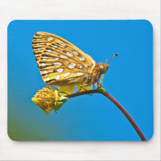 USA, Colorado. Skipper butterfly on flower stem Mouse Pad