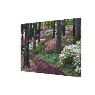 USA, Georgia, Callaway Gardens. Pathway Stretched Canvas Print