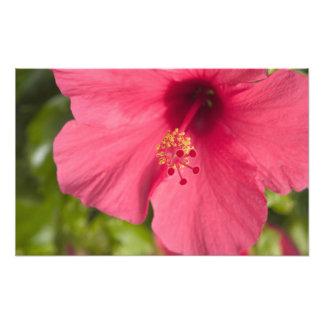 USA, Hawaii, Kauai, Hibiscus Photographic Print