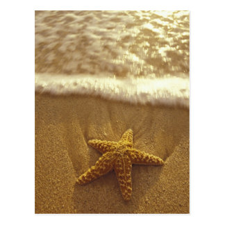 USA, Hawaii, Maui, Maui, Kihei, Starfish and Postcard