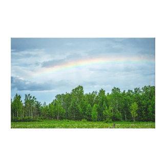 USA, Minnesota. Green meadow with wildflowers Gallery Wrap Canvas