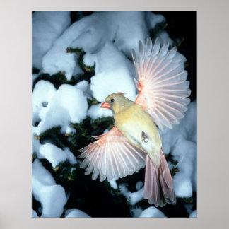USA, Minnesota, Mendota Heights, Female Cardinal Poster