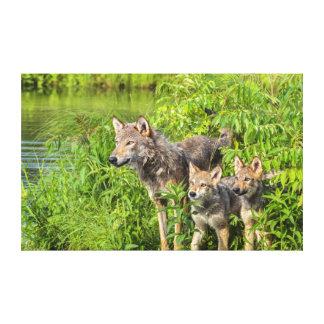 USA, Minnesota, Sandstone, Minnesota Wildlife 12 Canvas Print