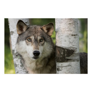 USA, Minnesota, Sandstone, Minnesota Wildlife 4 Poster