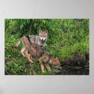 USA, Minnesota, Sandstone, Minnesota Wildlife 5 Poster