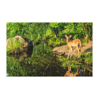 USA, Minnesota, Sandstone, Minnesota Wildlife 6 Stretched Canvas Print