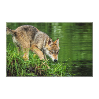 USA, Minnesota, Sandstone, Minnesota Wildlife 8 Gallery Wrapped Canvas