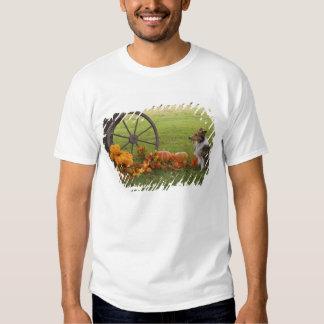 USA, New England, Massachusetts, Waltham, Gore T-shirts