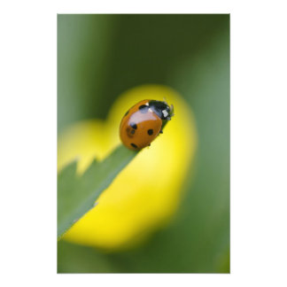 USA, North Carolina, Ladybug on tip of leaf. Photo