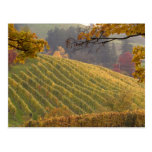 USA, Oregon, Newberg. Vineyard in the fall. Postcard