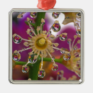 USA, Oregon, Portland. Cosmos flowers reflect in Silver-Colored Square Decoration