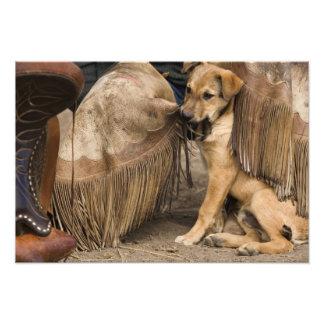 USA, Oregon, Seneca, Ponderosa Ranch. A puppy Photograph
