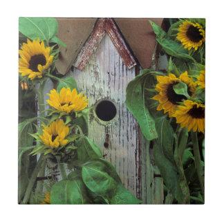 USA, Pennsylvania. Birdhouse and garden Small Square Tile